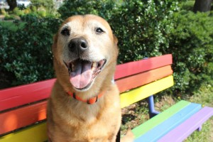 Jazzy Girl on the Rainbow Bench!